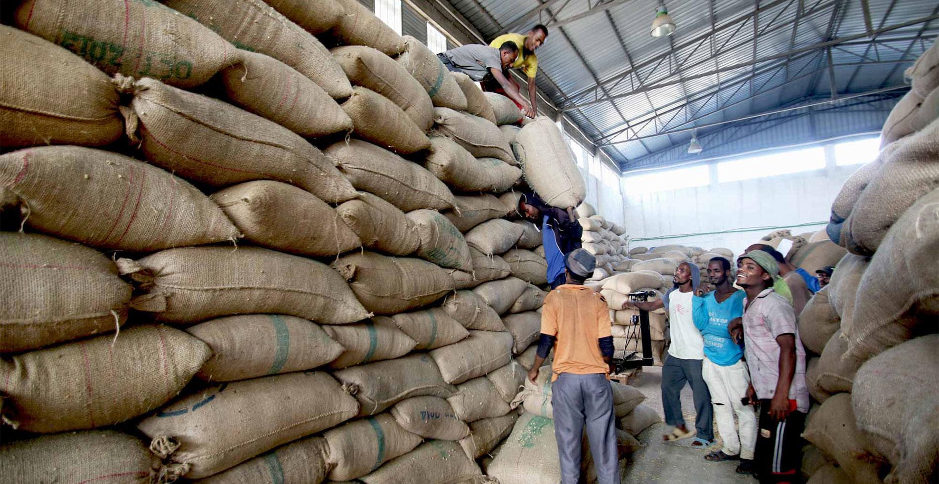 The Coffee Officina Beriti Tore Ethiopia Single Origin