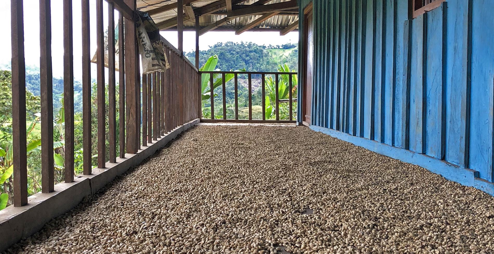 The Coffee Officina Tapir Andino Peru Single Origin